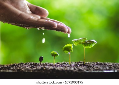 Green tree planting Tree growth Hands watering In the natural background