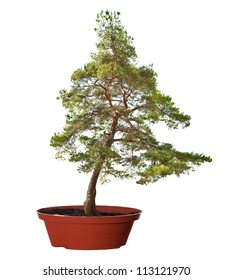 green tree in pot isolated on white background