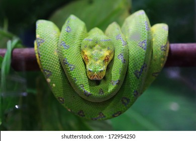 Snake Face Images, Stock Photos & Vectors   Shutterstock