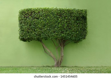 green tree with a rectangular crown