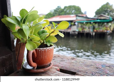 Green tree in a river cup