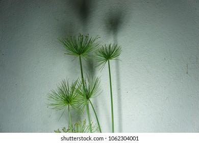Green tree and shadow on grey wall