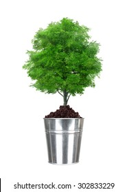 green tree in small metal bucket isolated on white