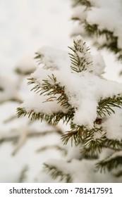 green tree in the snow closeup