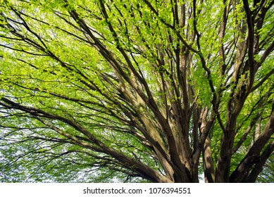 Green tree in the spring