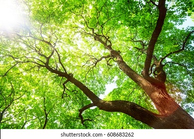 Green tree in spring day, branches catching the sun light
