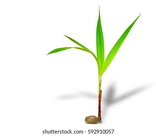Green tree sprout plants growing from seed on white background