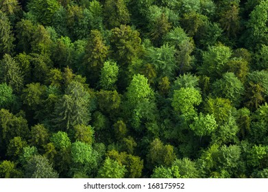 Green tree tops from air