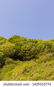 Green tree tops and blue sky