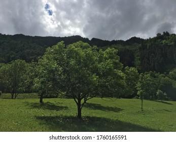 Green Tree under Grey Sky