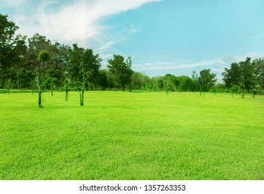 Green tree view with wide open lawn and blue sky in the morning