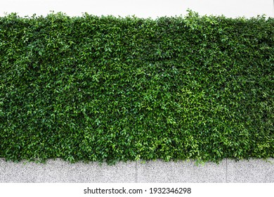 Green tree wall on the road