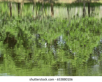 green tree water reflection in nature