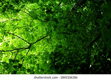 green tree white light in srping
