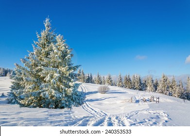 Green tree in winter landscape with snow trails