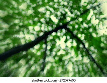 green tree with zoom effect