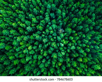 Green trees background in Lithuania, Europe