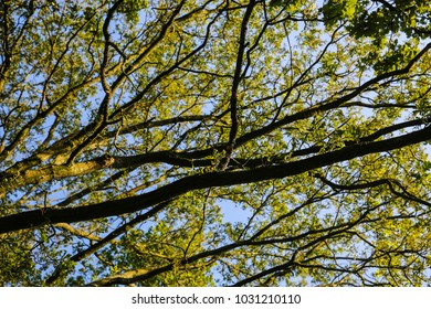 Green trees in the background sky view from the bottom up.