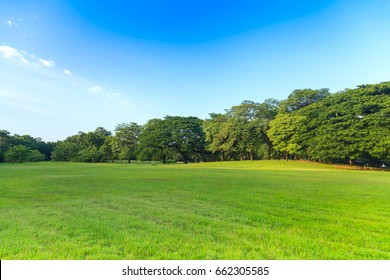 Green trees in beautiful park under the blue sky
