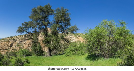 Green trees and brush grow in a California rocky valley near Santa Clarita California.