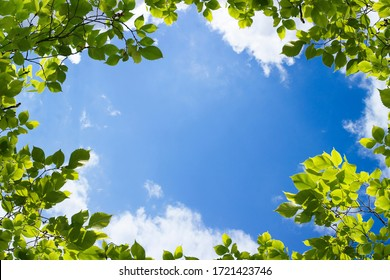 green trees and a cloudy blue sky