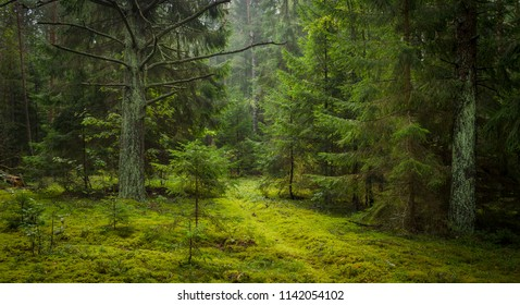 green trees of the forest