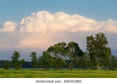 Green trees in front of a large cumulonimbus cloud just before the summer storm, Greater Poland, Poland.