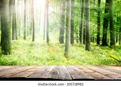 green trees and garden or forest with floor