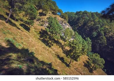 Green trees growing on a hillside in Dakshinkali, Nepal