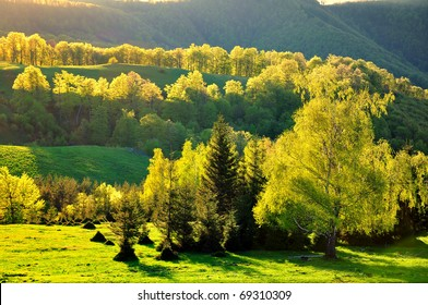 Green trees illuminated by the sunset light near Pleven Hut in Bulgaria.