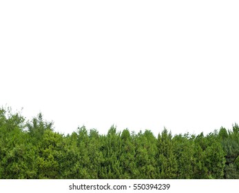 Green trees isolated