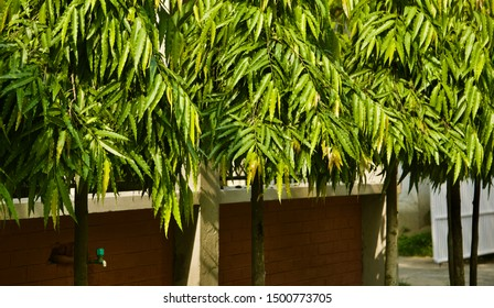 Green trees with leaves with concrete protection wall background