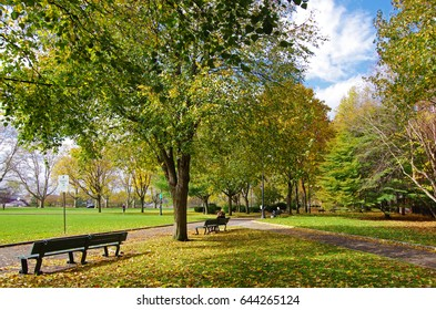Green trees and meadows and benches at a corner of the JFK School of Governance, Harvard University