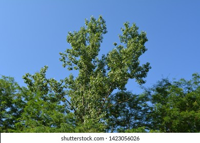 green trees on blue sky