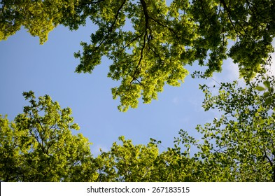 Green trees on a blue summer sky