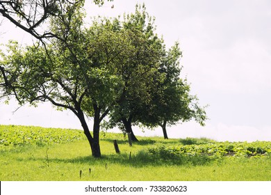 green trees on the field in the village