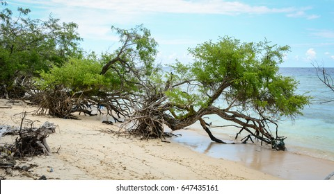 Green trees on the sea at Gili Islands in Lombok, Indonesia. Lombok is known for beaches and surfing spots, particularly at Kuta and Banko Banko.