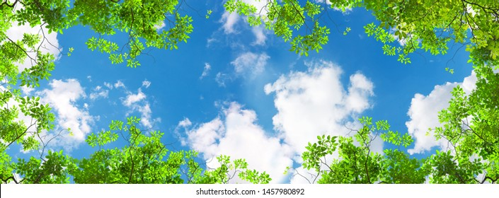 green trees and panoramic sky