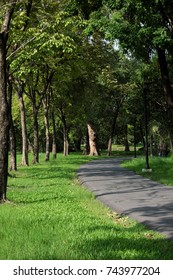 green trees in the park shaded with sunlight