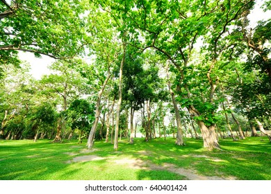 Green trees in public park with green grass field