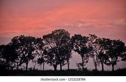 Green trees with red afternoon sky background photo