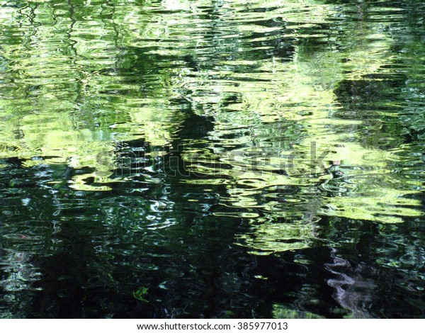 Green Trees Reflected in Water