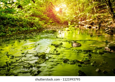 Green trees reflecting in a river running through a forest in the summertime