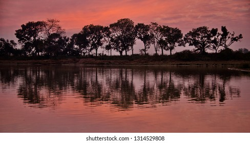 Green trees with reflection in water of a lake in the afternoon