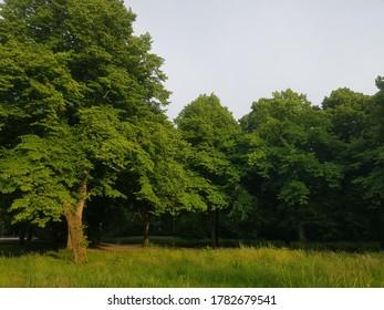 Green trees in summer in light