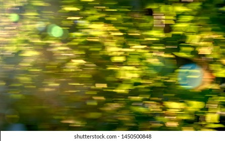 Green trees at sunset, green leaves background