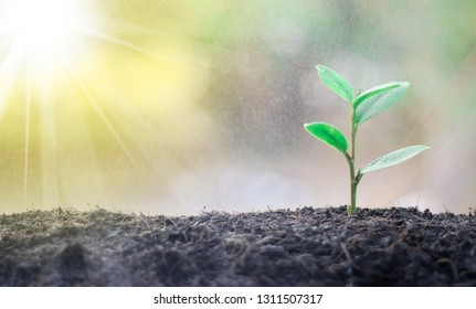 Green trees that are growing in the middle of the sunlight in the morning help to protect the environment and prevent global warming.