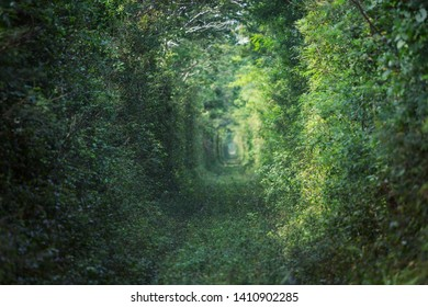 Green trees tunnel. Natural background.