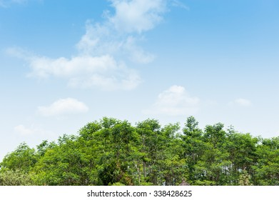 Green trees under the blue sky and white clouds.
