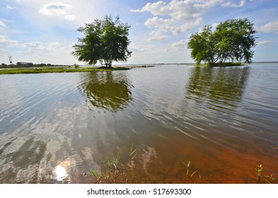 Green trees in the water under beautiful sky